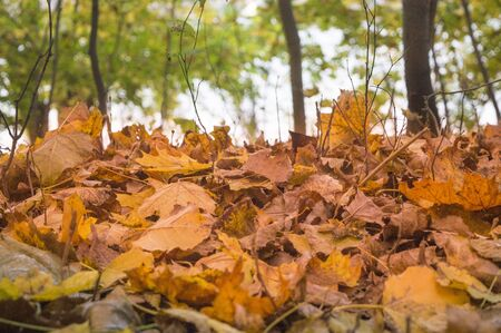 Fallen orange leaves on the ground in a park in the fall Imagens