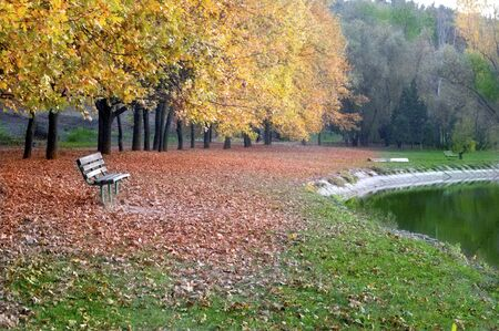 Fallen leaves of trees in autumn in the park near the lake