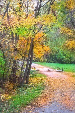 Autumn color palette in a city park Imagens