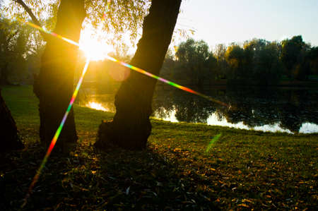 Beautiful rays of the sun between the trees in the park by the lake.
