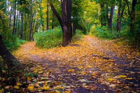 Beautiful autumn landscape in the park. 免版税图像