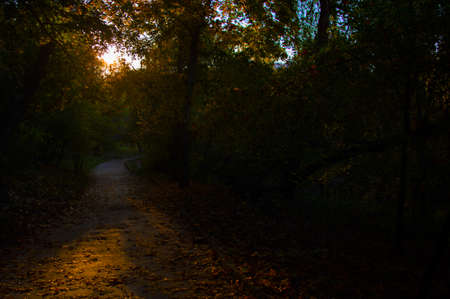 Footpath in a dark autumn forest. 免版税图像