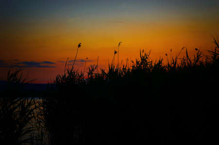 Late sunset on the lake in the reeds.