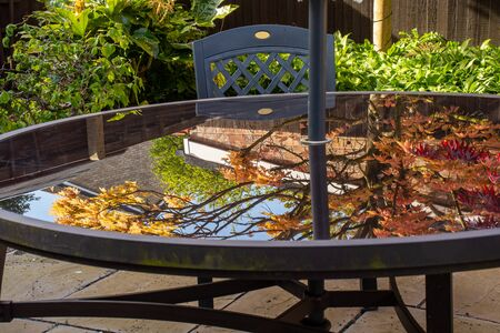 Reflections of new maple growth in a glass patio table