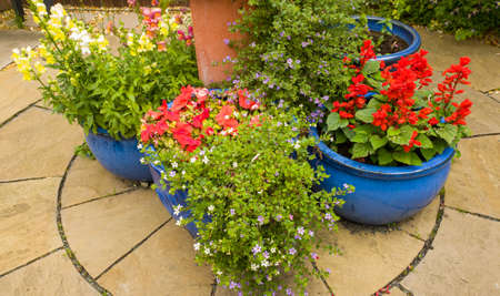 A display of summer annuals in blue glazed patio pots on indian stone