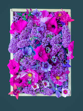 A box of various shades of purple flowering plants common in the English September garden 免版税图像