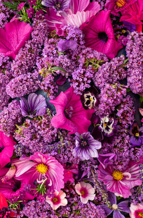 Top down view of a selection of purple flowering plants common in the English September garden