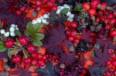 Top down view of autumn leaves, fruit, berries and nuts from an English garden 免版税图像