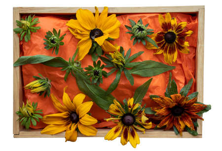 A box of various shades of cone-flowers common in the English October garden