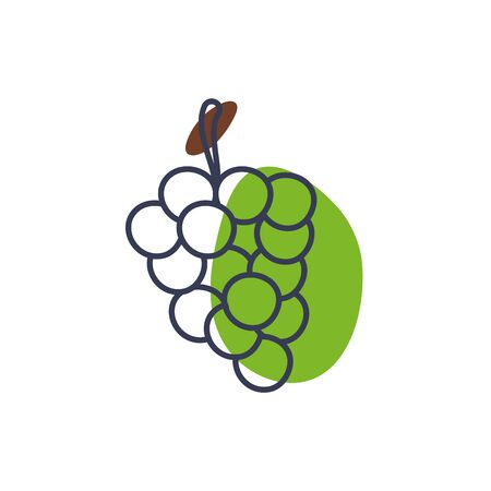 grapes line color style icon design, Fruit healthy organic food sweet and nature theme Vector illustration  イラスト・ベクター素材