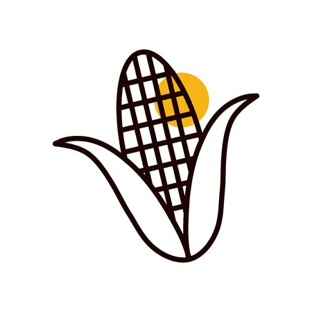 Corn half line half color style icon design, Food vegetable agriculture green plant maize cob and organic theme Vector illustration