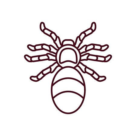 jumping spider icon over white background, line style, vector illustration