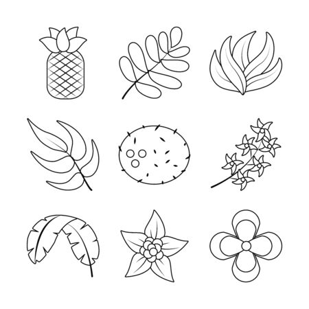 leaves and tropical fruits icon set over white background, line style, vector illustration