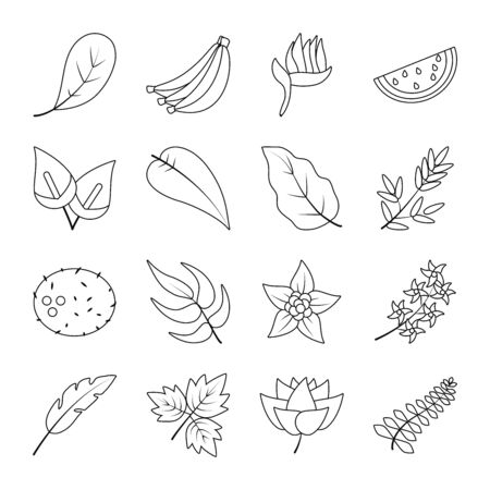 tropical flowers and fruits icon set over white background, line style, vector illustration Reklamní fotografie - 150018098