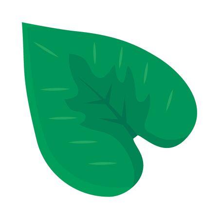 anthurium leaf icon over white background, colorful design, vector illustration Ilustracja
