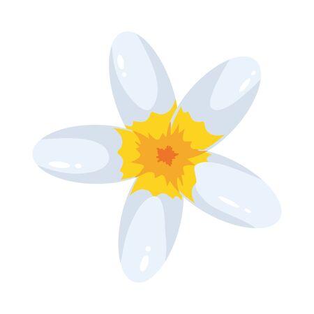 plumeria flower icon over white background, colorful design, illustration
