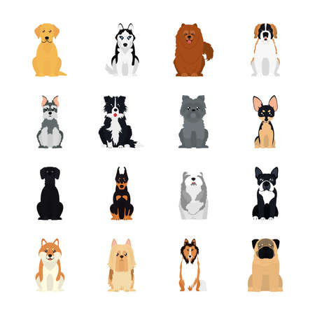 icon set of collie and dogs over white background, flat style, vector illustration
