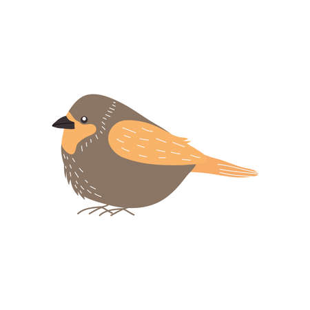 cartoon robin bird icon over white background, flat style, vector illustration