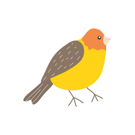 cartoon finch bird icon over white background, flat style, vector illustration