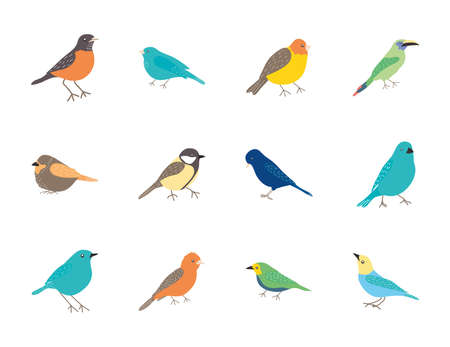 cartoon birds icon set over white background, flat style, vector illustration
