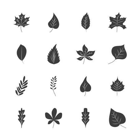 icon set of rowan leaf and autumn leaves over white background, silhouette style, vector illustration Vektorové ilustrace