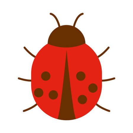 ladybug insect icon over white background, flat style, vector illustration