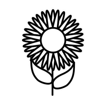 beautiful sunflower icon over white background, line style, vector illustration 矢量图像