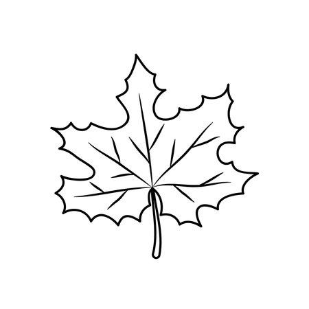 icon of maple leaf over white background, line style, vector illustration Illusztráció