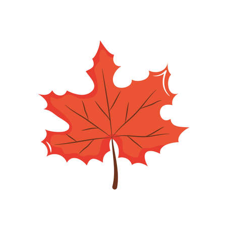 icon of maple leaf over white background, flat style, vector illustration