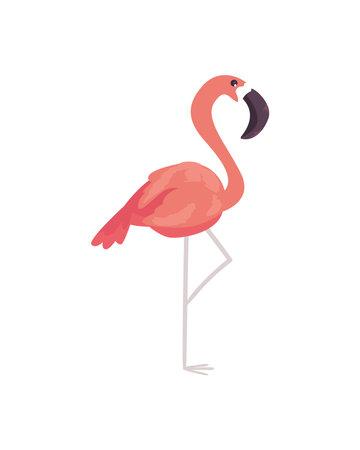 Pink famingo bird