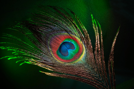 plumas de pavo real: hermosa pluma de pavo real de cerca sobre un fondo oscuro Foto de archivo