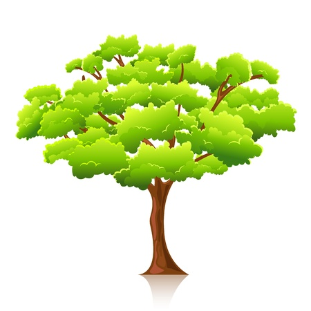 leafy: illustration of big tree on isolated white background Illustration