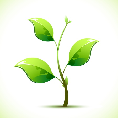small plant: illustration of plant sapling growing on abstract background