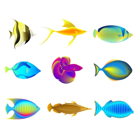 marine coral: illustration of coolection of colorful fishes on isolated background Illustration