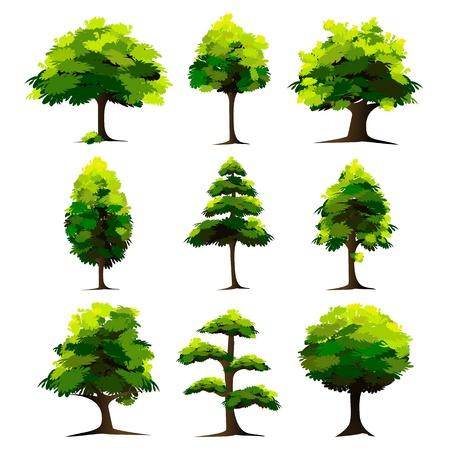 illustration of set of tree on isolated white background Stock Illustration - 8991822