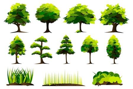 leafy trees: Ilustraci�n del conjunto de �rbol sobre fondo blanco aislado