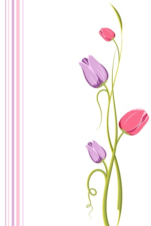 illustration of swirls of tulip flower on white background with colorful strip