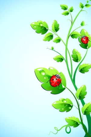 lady bug: illustration of bugs sitting on plant on abstract background