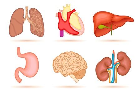 intestin: