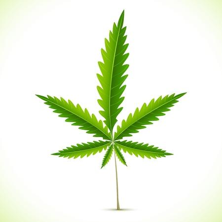 cannabis: Illustration von Marihuana auf abstrakten Hintergrund Illustration