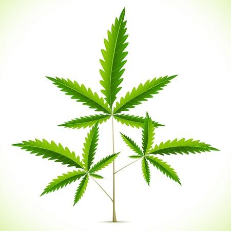 hanf: Darstellung von Marihuana Blatt auf abstrakten Hintergrund Illustration