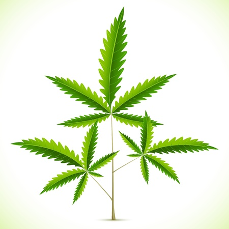 marihuana: illustratie van marihuana blad op abstracte achtergrond