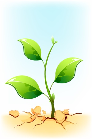 seedling growing: illustration of plant sapling growing on rock soil in draught area