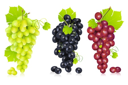 wine and grapes: illustration of different variety of grape on white background
