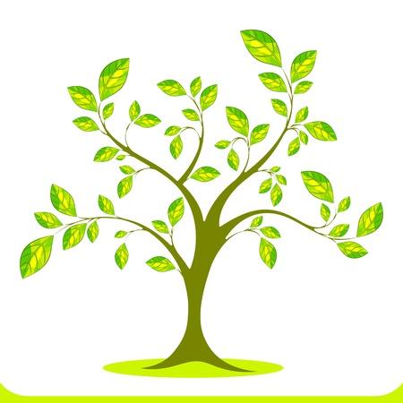 arboles frondosos: ejemplo de �rbol que crece en el fondo blanco Vectores