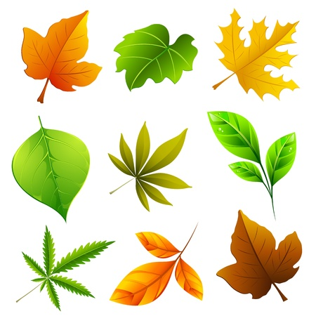 the dry leaves: ejemplo de conjunto de hojas diferentes en el fondo aislado Vectores
