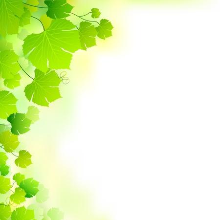 illustration of fresh green leaf forming nature background Vector