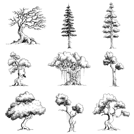 illustratie van set van boom op geïsoleerde witte achtergrond