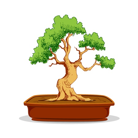 illustration of bonsai tree in earthen pot on white background