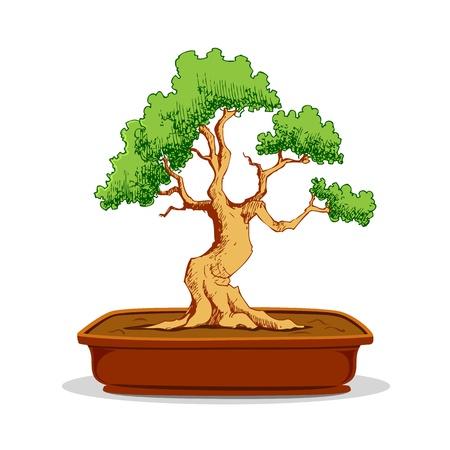 earthen: illustrazione di bonsai in vaso di terracotta su sfondo bianco